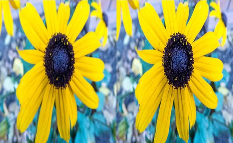 How To Fix Blurry Pictures in PaintShop Pro